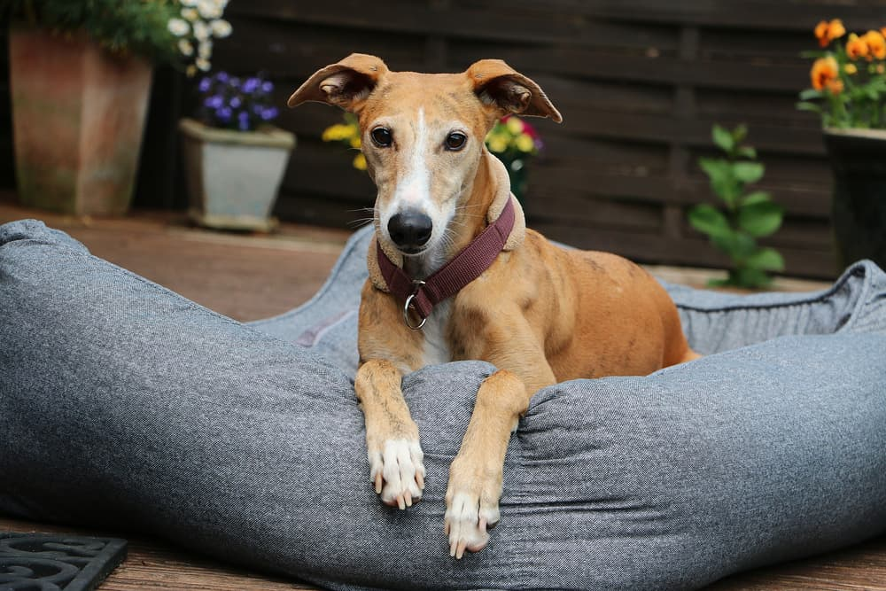 Best Bolster Dog Beds for Extra Comfort