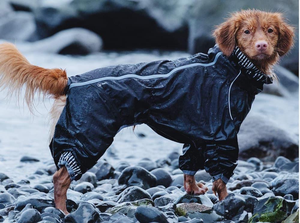 Hurtta dog raincoat