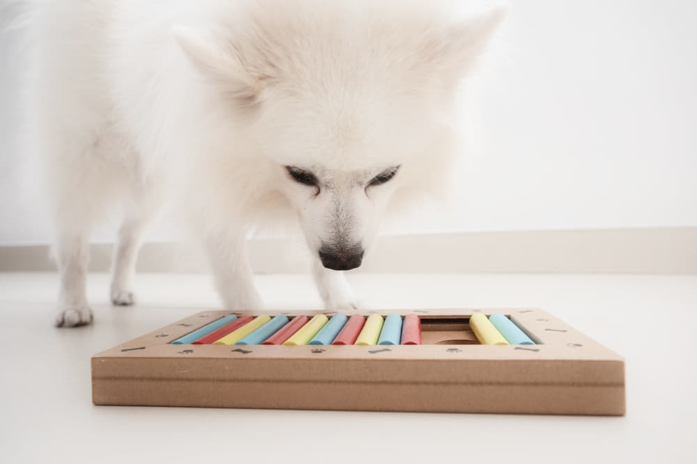 7 Dog Puzzle Toys to Boost Brainpower