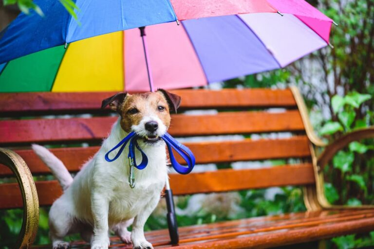 Dog with umbrella on bench