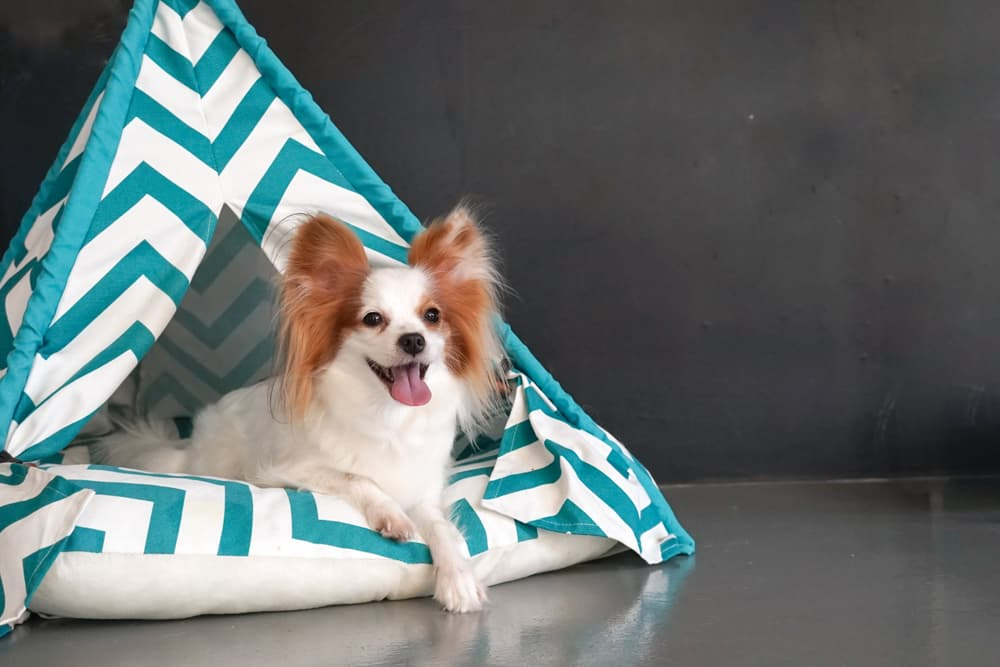 Dog in a teepee bed