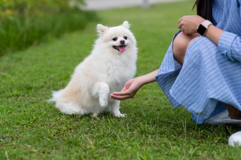 Woman giving dog calming treat