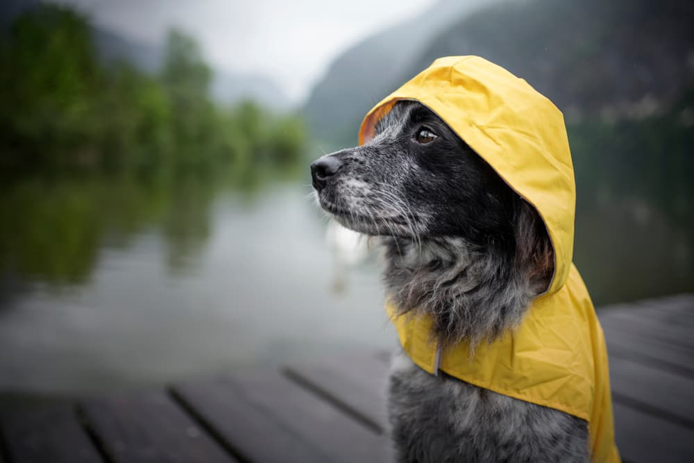 9 Dog Raincoat Picks for Wet Weather
