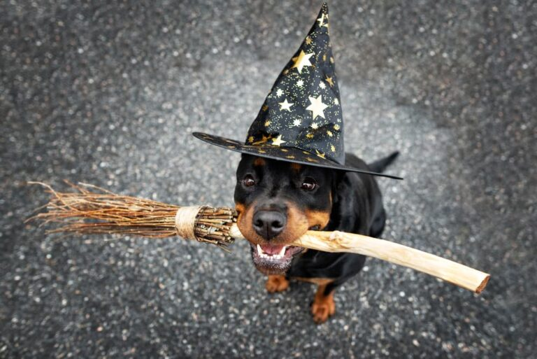 Dog dressed like a wizard