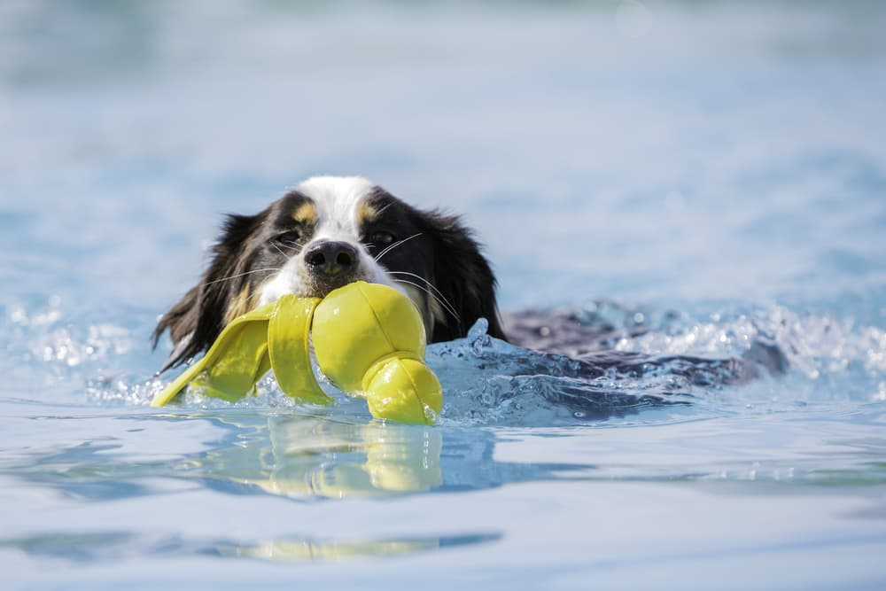 10 Dog Water Toys for Splashing Around