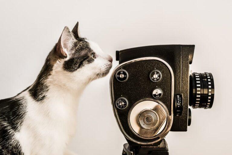 Cat with film camera