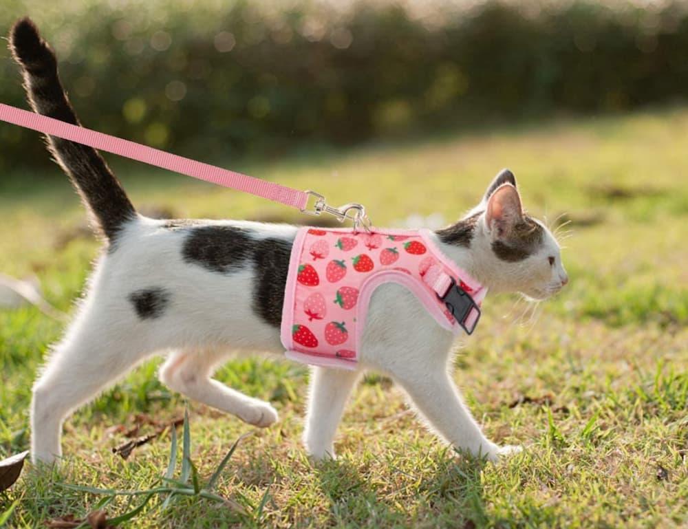 BINGPET Cat Harness With Leash