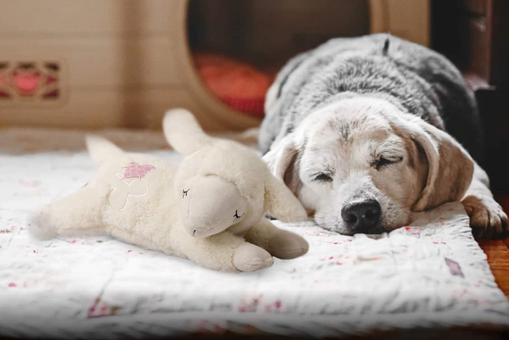 Puppy with lamb heartbeat toy