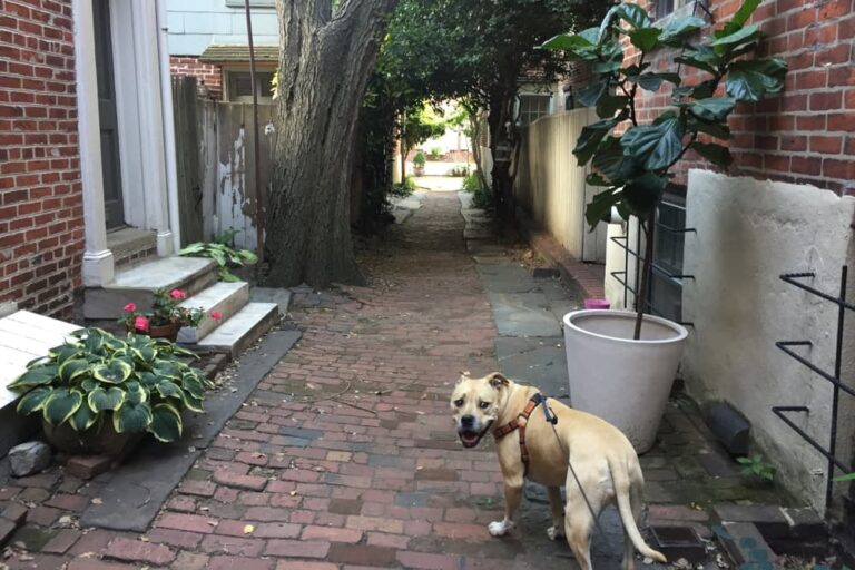 Dog in Philadelphia