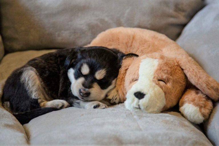 puppy with heartbeat toy