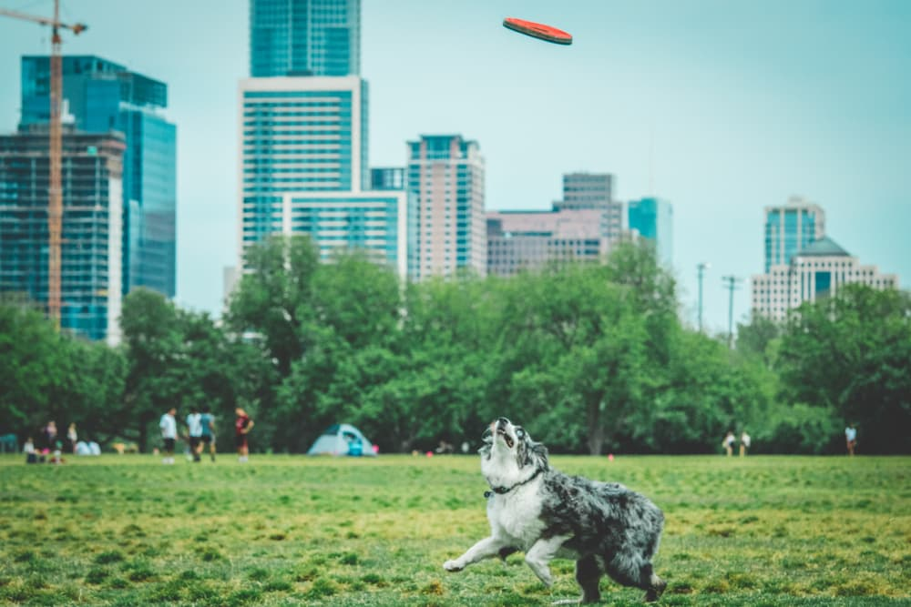 5 Top-Rated Off-Leash Dog Parks in Austin