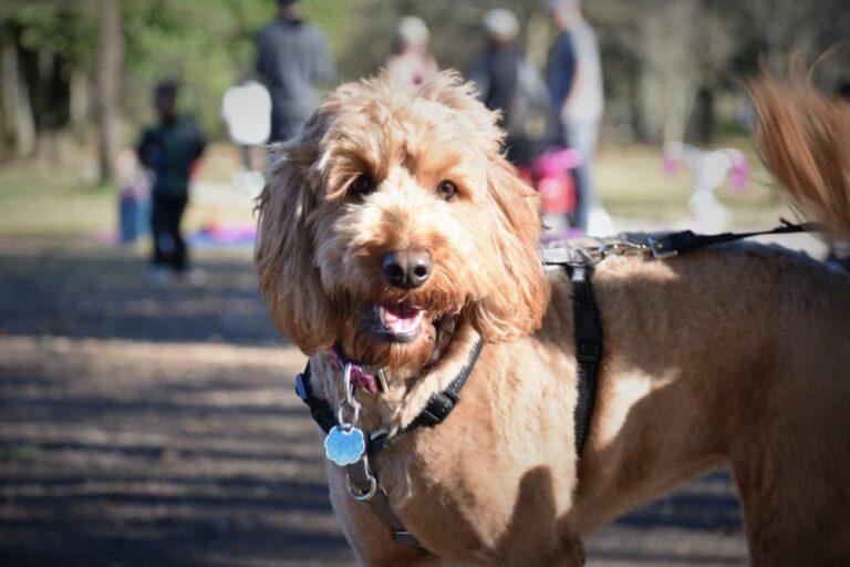 Dog in Piedmont Park Atlanta