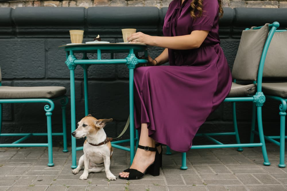 20 Dog Friendly Restaurants NYC is Home To
