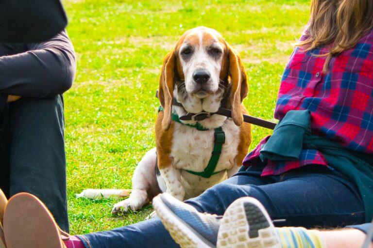 Dog in Prospect Park