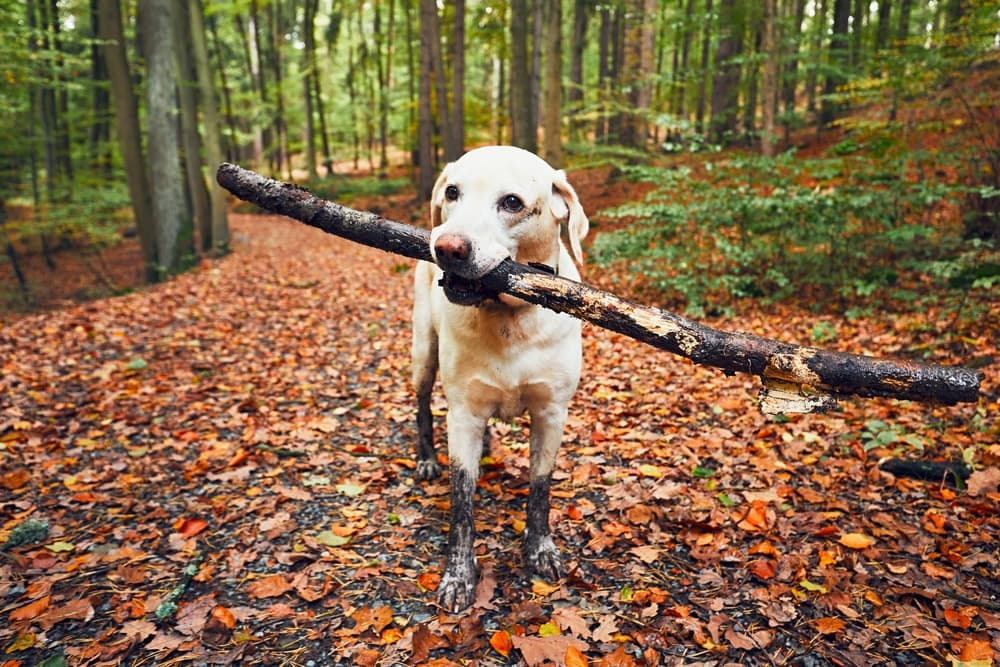 The Best Dog Friendly Hiking Trails Near NYC