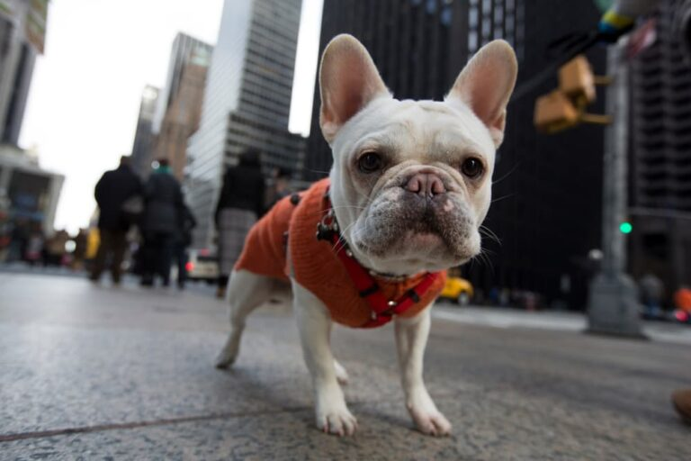 Dog in New York City