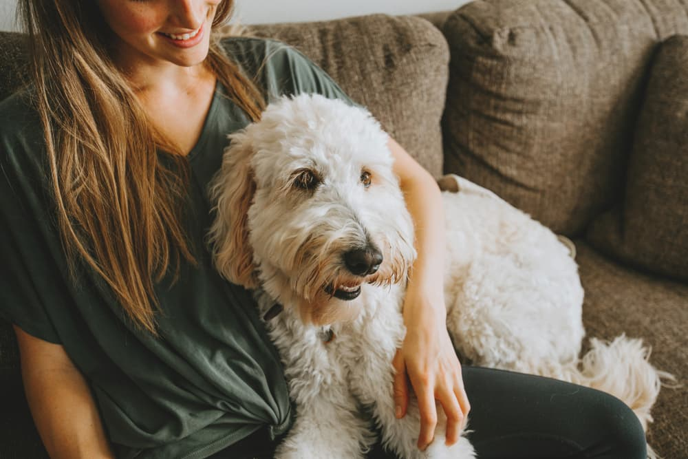 TrustedHousesitters Overview: Finding a Reliable In-Home Pet Sitter