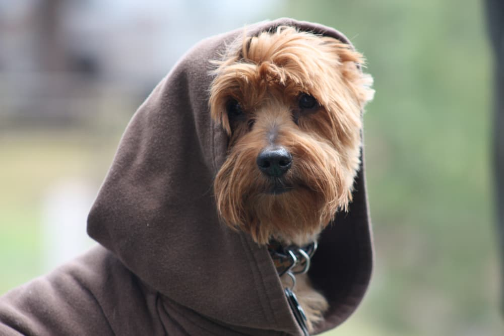 54 Star Wars Dog Names That Are Out of This World