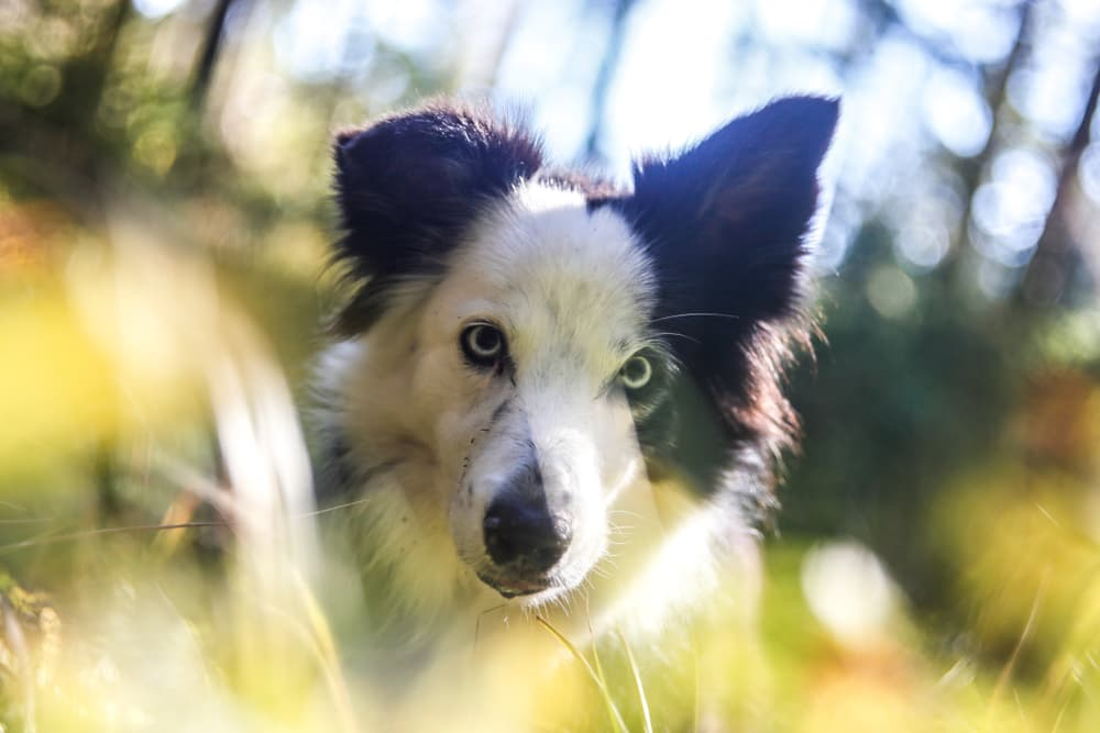 Dog hiding in grass