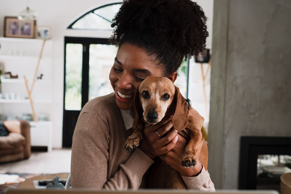 Pet Wellness Plans: 6 Top Ones to Consider
