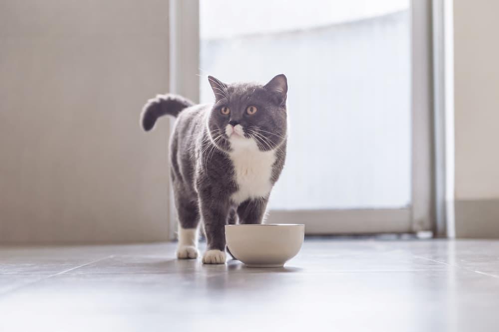 7 Best Freeze-Dried Cat Foods