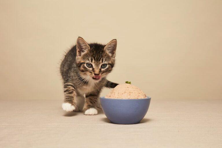 kitten eating Smalls human-grade fresh food