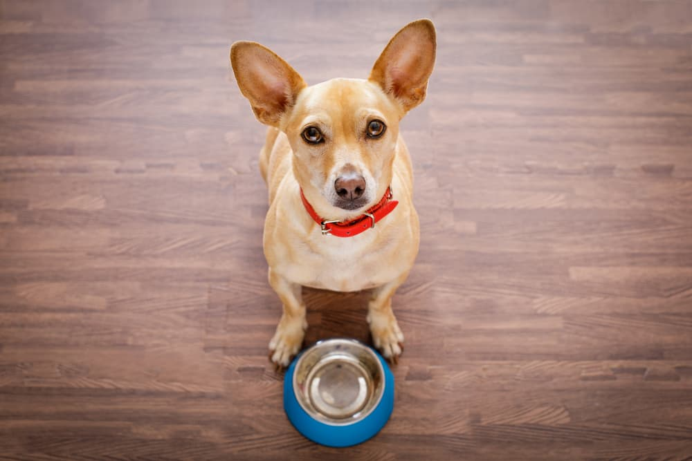 Spirulina for Dogs: Benefits and Uses