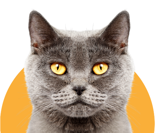 Cat nutrition suggestions backed by veterinarians and sponsored by Wellness Core Digestive Health.