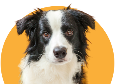 Dog nutrition guidance and recommendations backed by veterinarians.