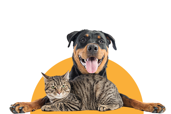 Stay up to date with pet-related recalls and alerts so you can help keep your dog or cat safe.