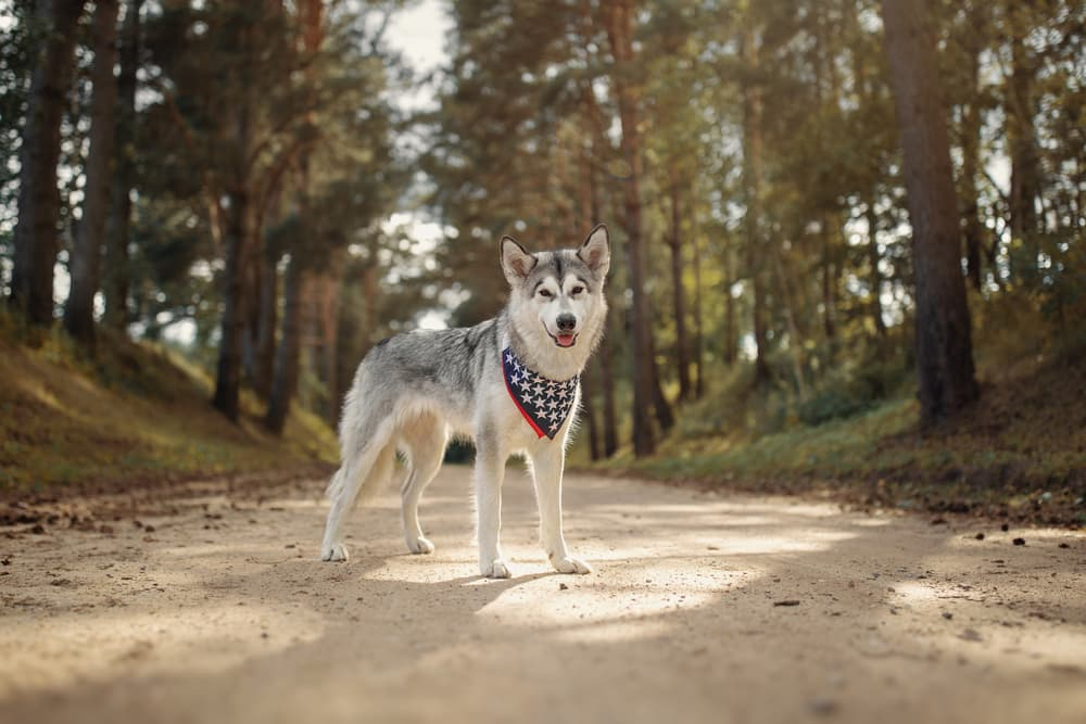 9 All-American Dog Breeds