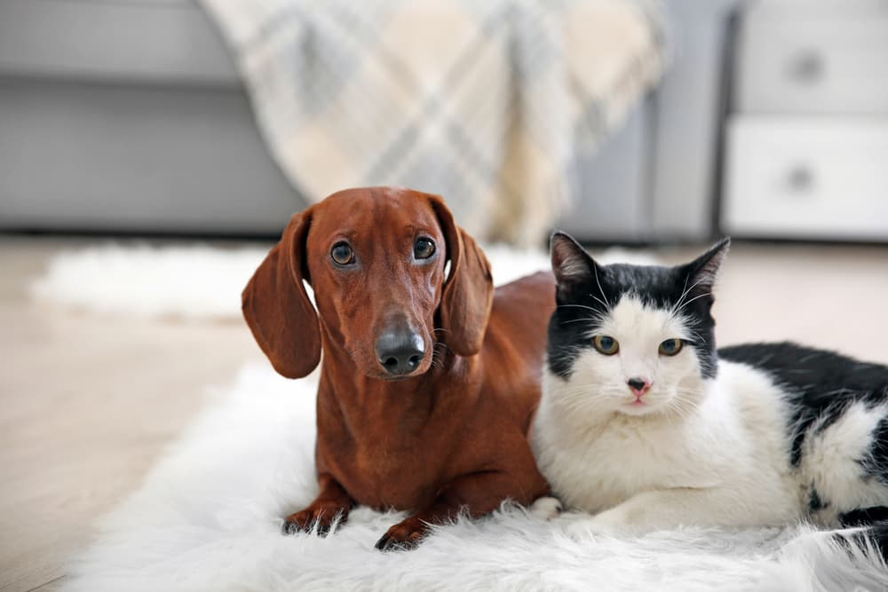 6 Best Probiotics for Dogs and Cats