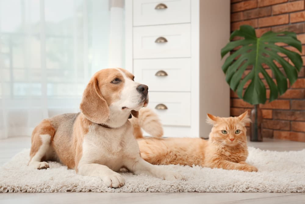 Pain Relief for Dogs and Cats: 8 Best Products to Try