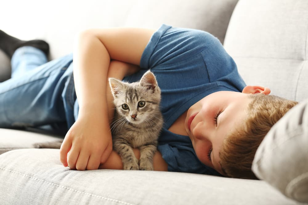 Kitten sitting on the couch with young boy and arms around the cat