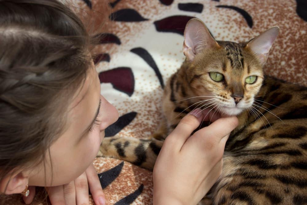Teenage girl petting her Bengal cat
