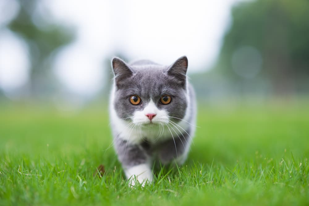Small cat or kitten walking in grass out in the garden