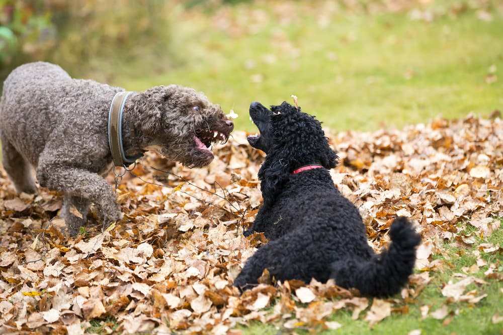 Two dogs fighting outside in the autumn