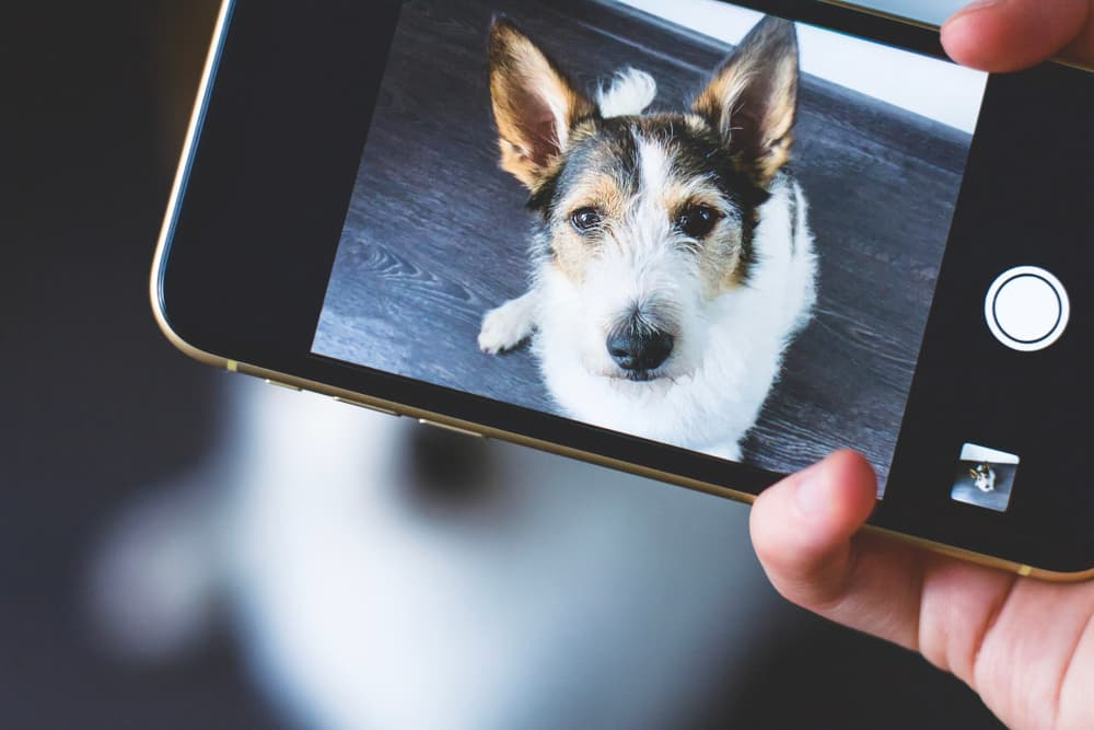 Holding phone and taking photo of a dog