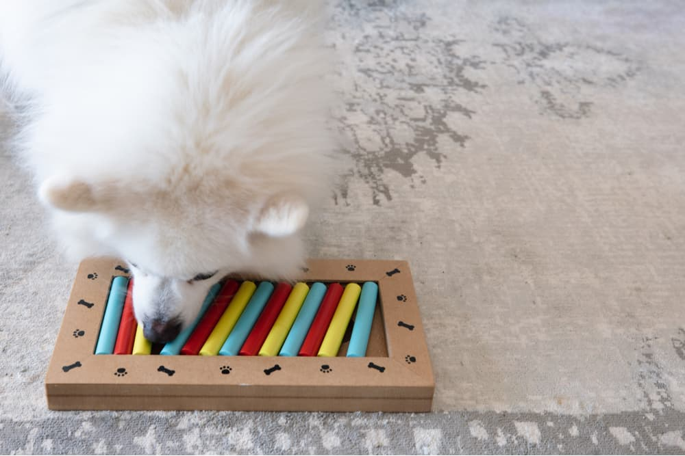 Dog playing with a puzzle toy