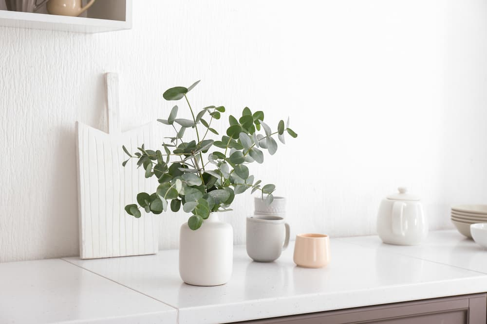 Eucalyptus branches in a vase on kitchen counter