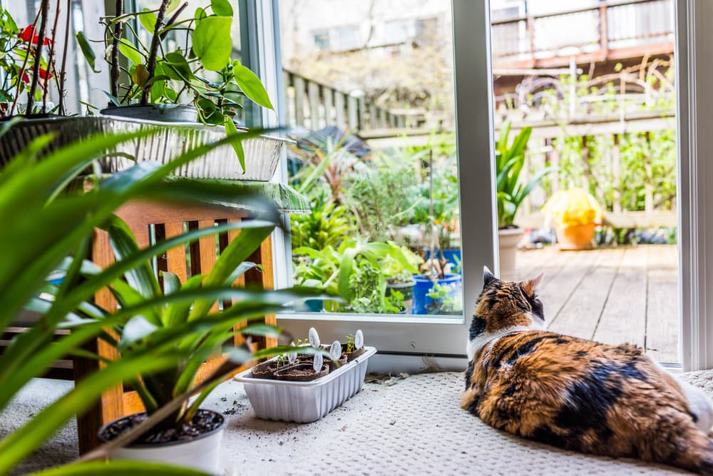 Cat laying comfortably in house surrounded by plants