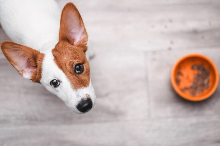 Dog with empty food bowl