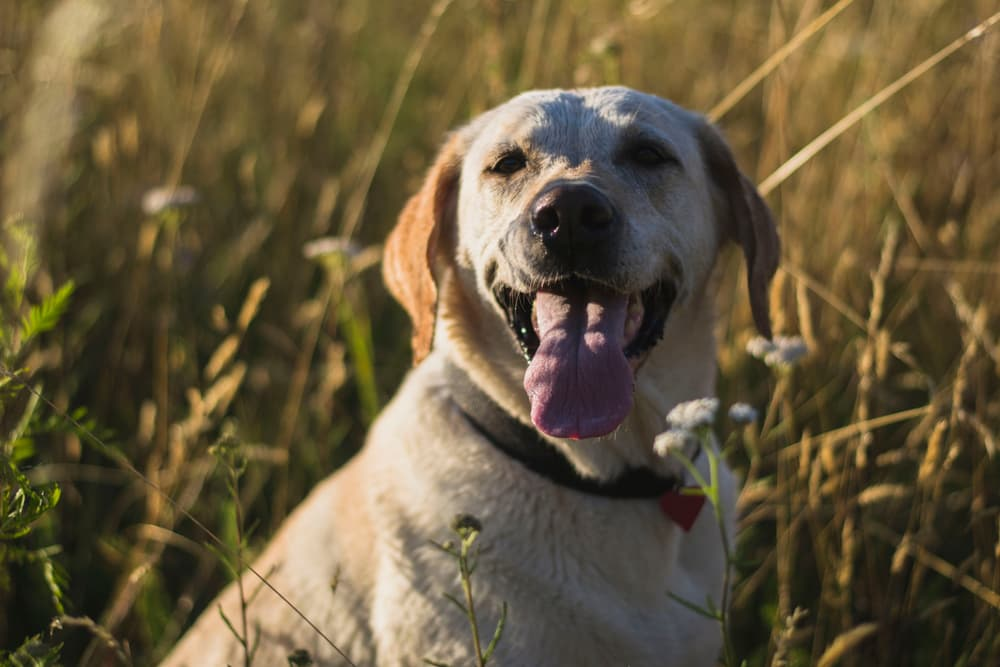 Hemp for Dogs: Putting HempMy Pet to the Test