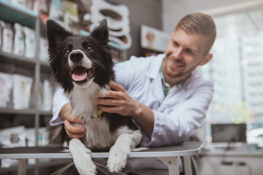 Trilostane for Dogs