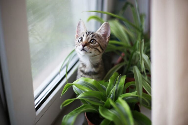 Cat sitting on a windowsill with plants