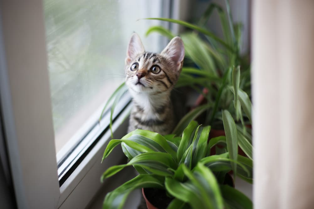 Plants Safe for Cats: 20 to Keep in Your Home