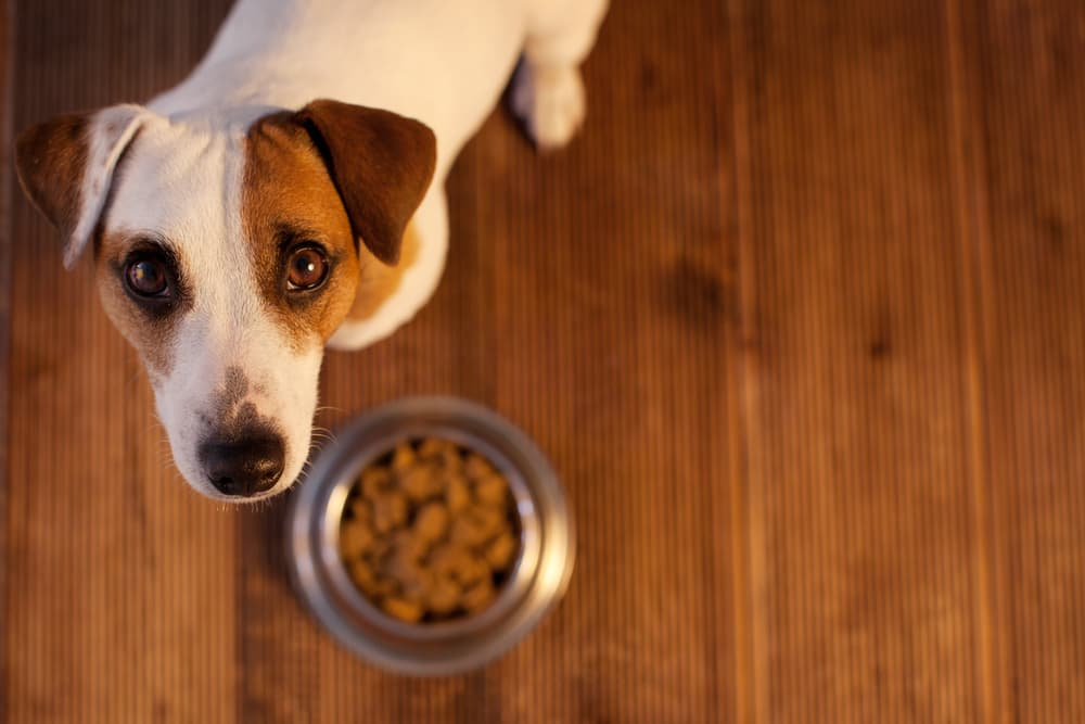 Aflatoxin in Dog Food: What You Need to Know