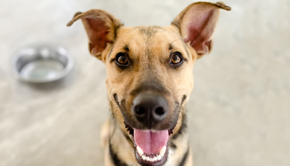 dog smiling after eating