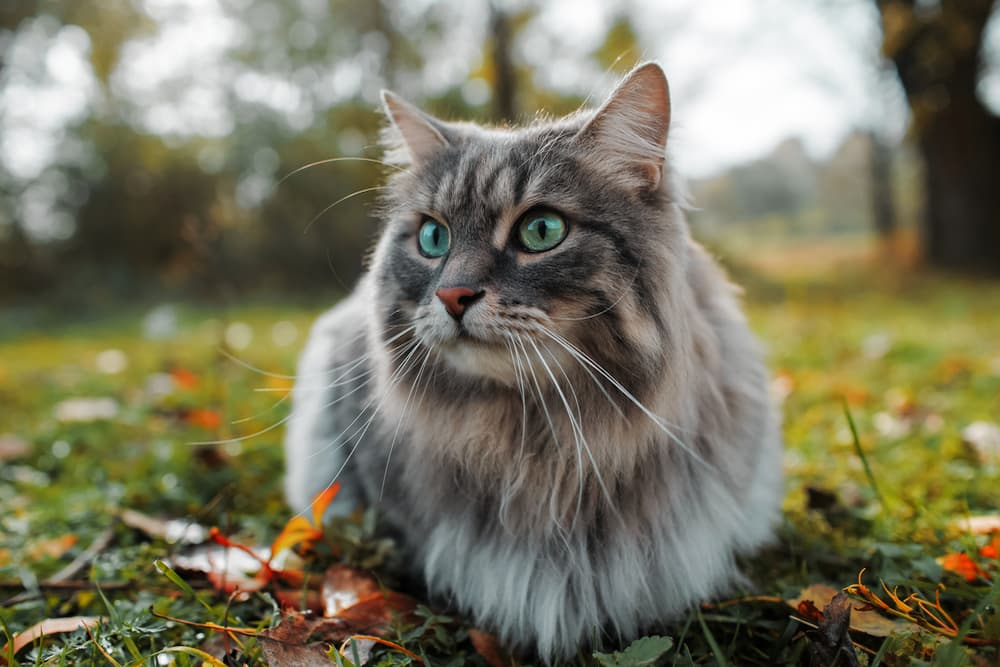 Cat laying outside in the garden