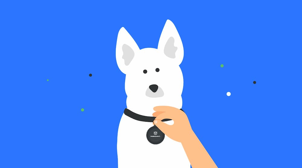 Illustration of a dog wearing their tag from Pawscout